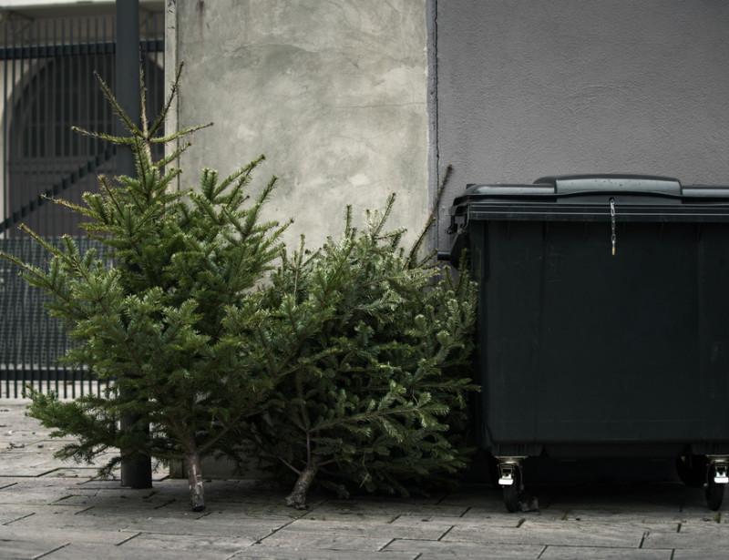 Comment recycler son sapin de Noël ?