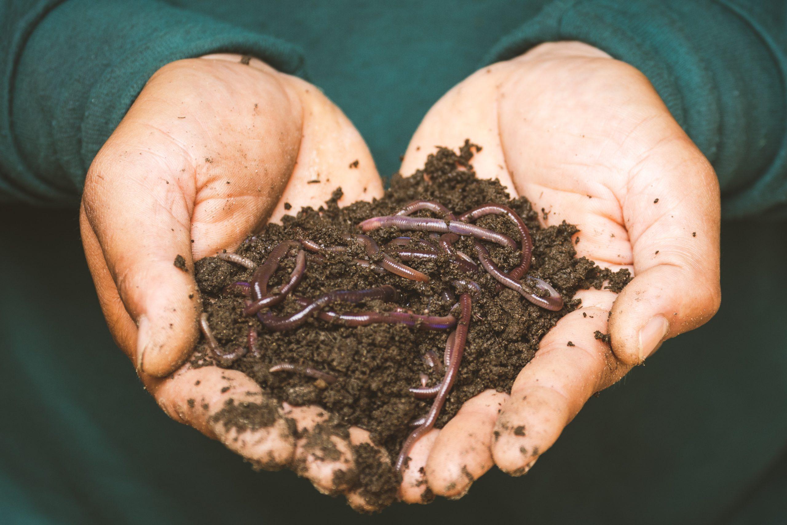 Quand les déchets alimentaires des villes alimentent les champs à la campagne